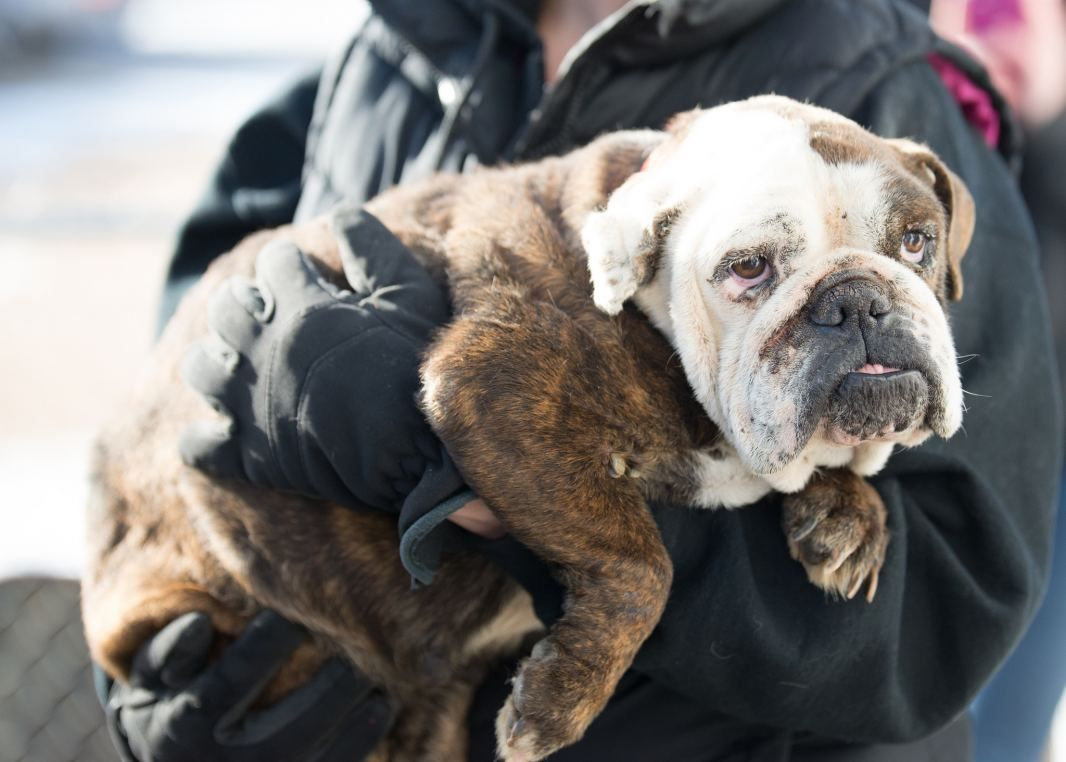 Puppy Mill Survivor Now Safe At National Mill Dog Rescue S