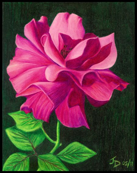 Google Image Result for http://www.onlinebydesign.ca/drawings_thumbs/rose_color_pencil_drawing_450.jpg