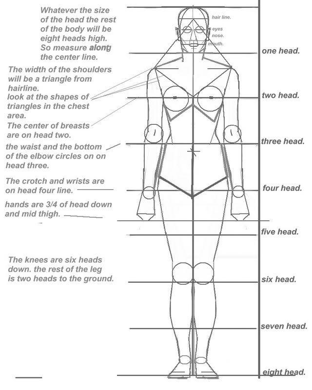 Character Design Proportions : Basic human proportion sheet classroom ideas pinterest