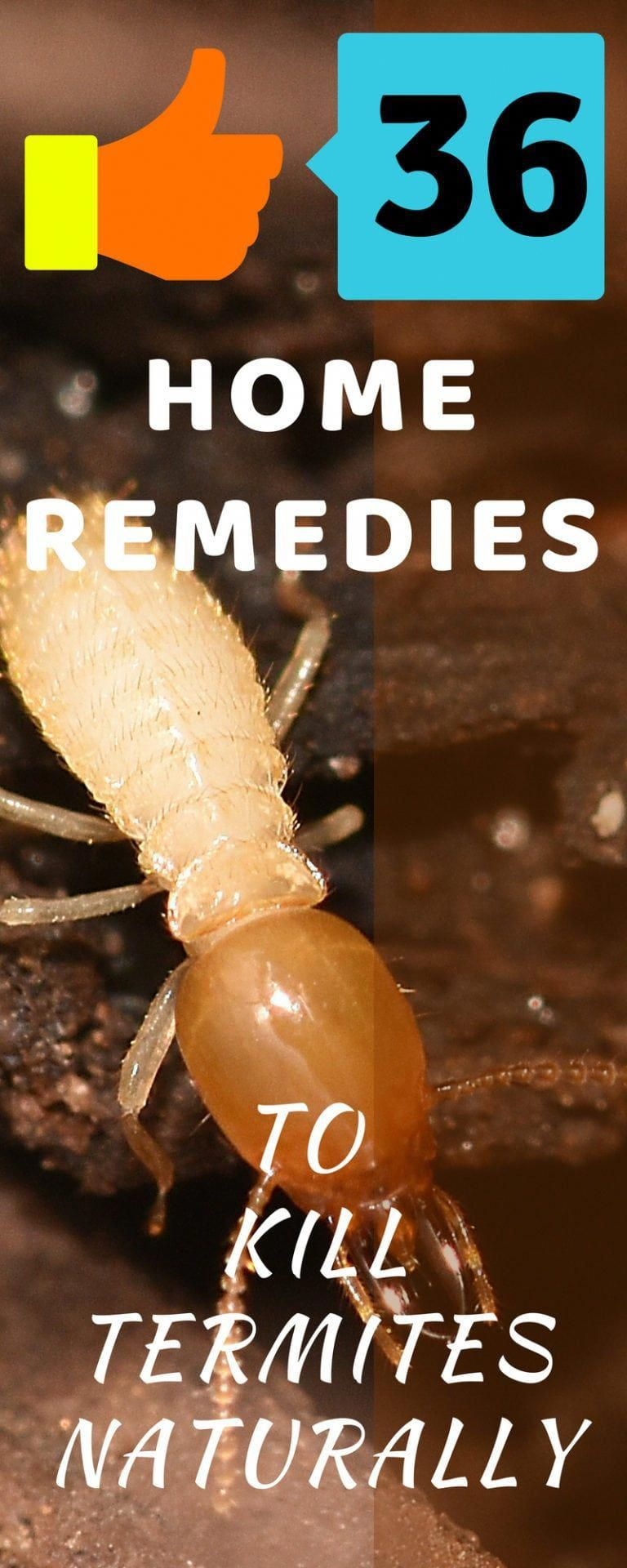 36 Termite Control Remedies How to Get Rid of Termites