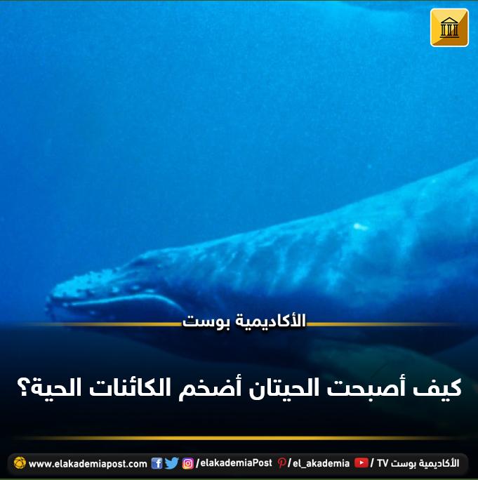 تعد الحيتان من أضخم الكائنات الحية على كوكب الأرض متغلبة على جميع المخلوقات المائية بل واليابسة حتى الديناصورات فما الذي أت Lockscreen Tv Lockscreen Screenshot