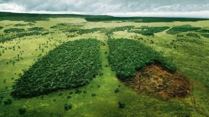 bosque-pulmon