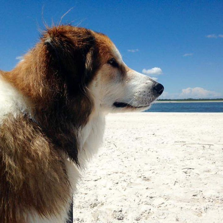 Heartworm Medicine Without A Vet Dog thoughts, Dogs
