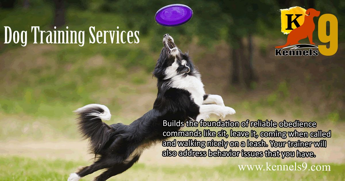 Dogtraining And Doggrooming Services At Affordable Prices