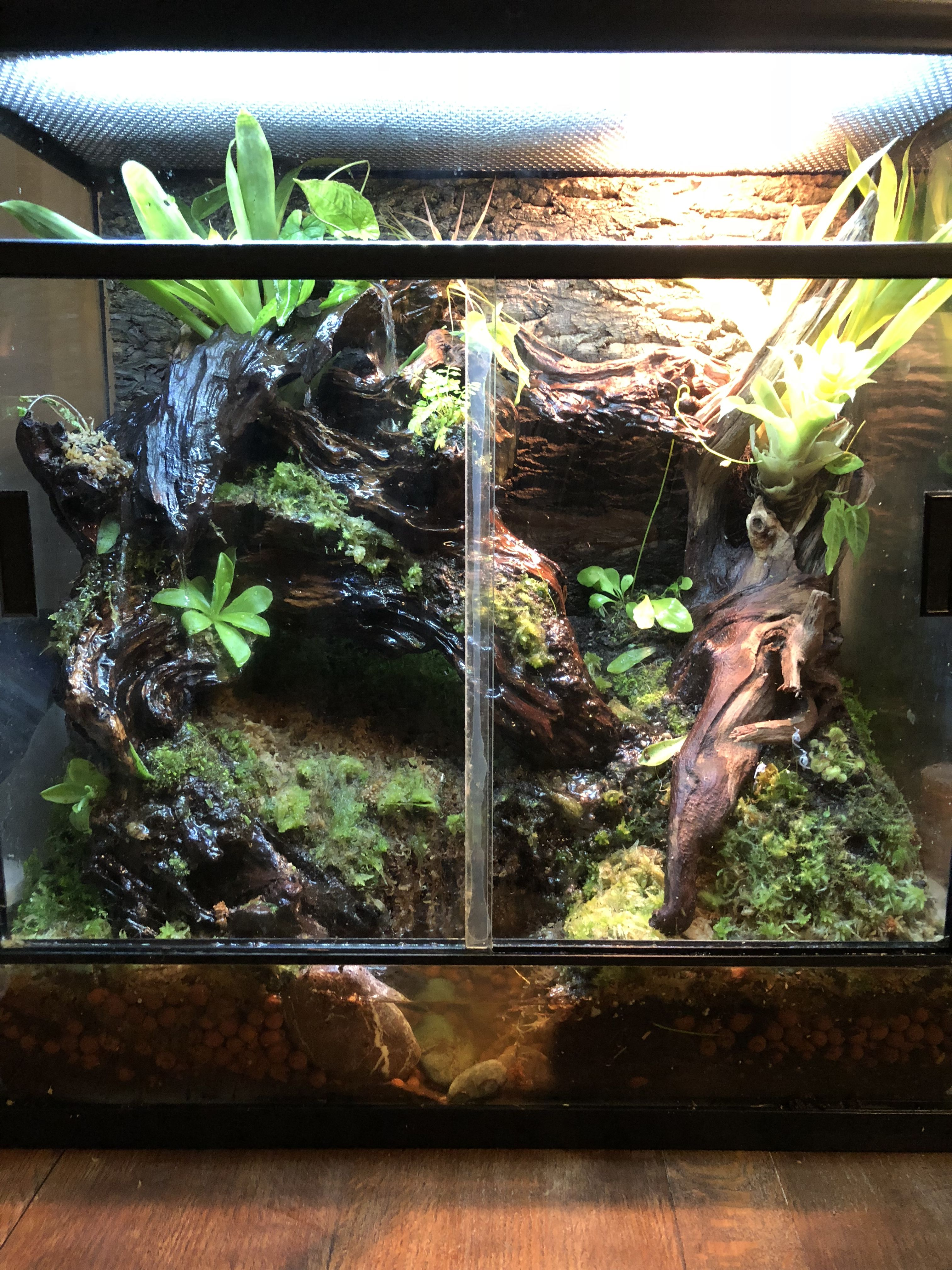 My Newly Constructed Frog And Day Gecko Vivarium Waterfall Dart