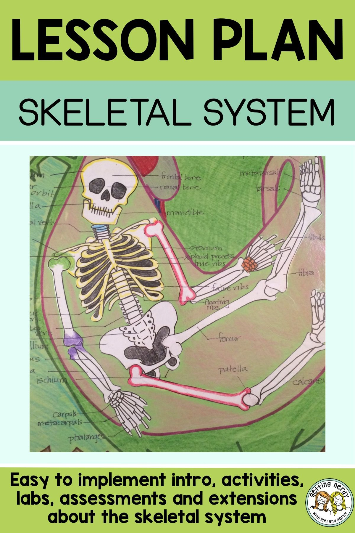 Lesson Plan Skeletal System Project Getting Nerdy Science