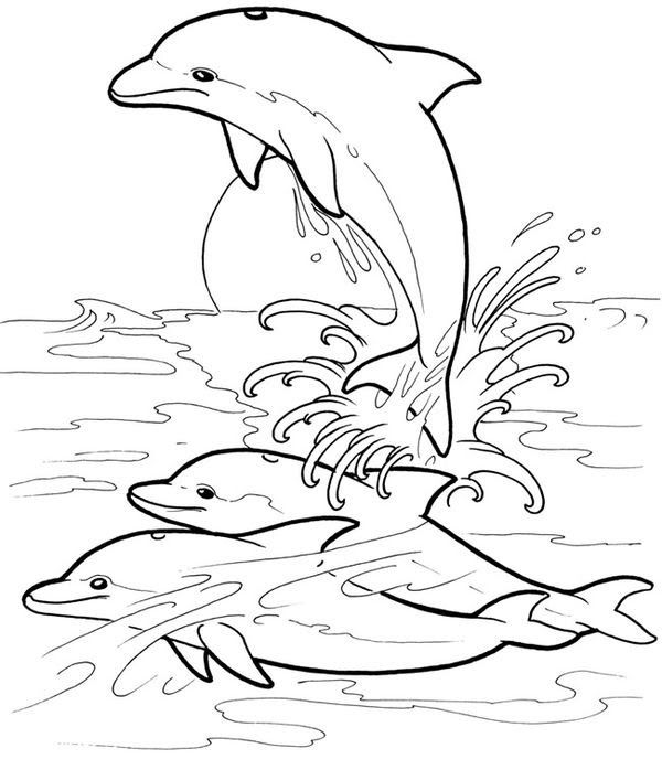 Pin By Clara Montero Lopez On Colouring Pages Dolphin Coloring Pages Coloring Pages Animal Coloring Pages