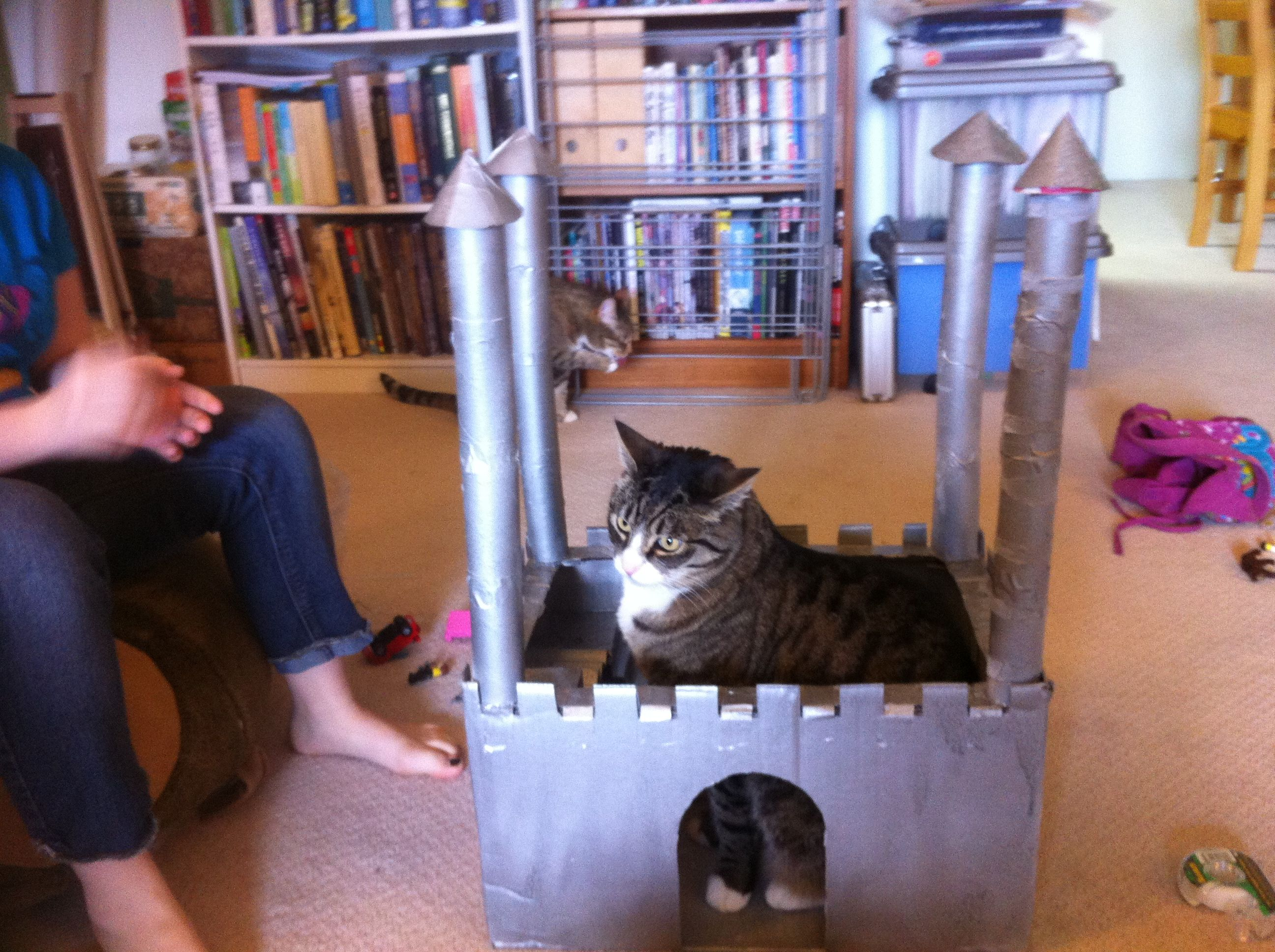 Cardboard Castle (can't imprison cats though)!
