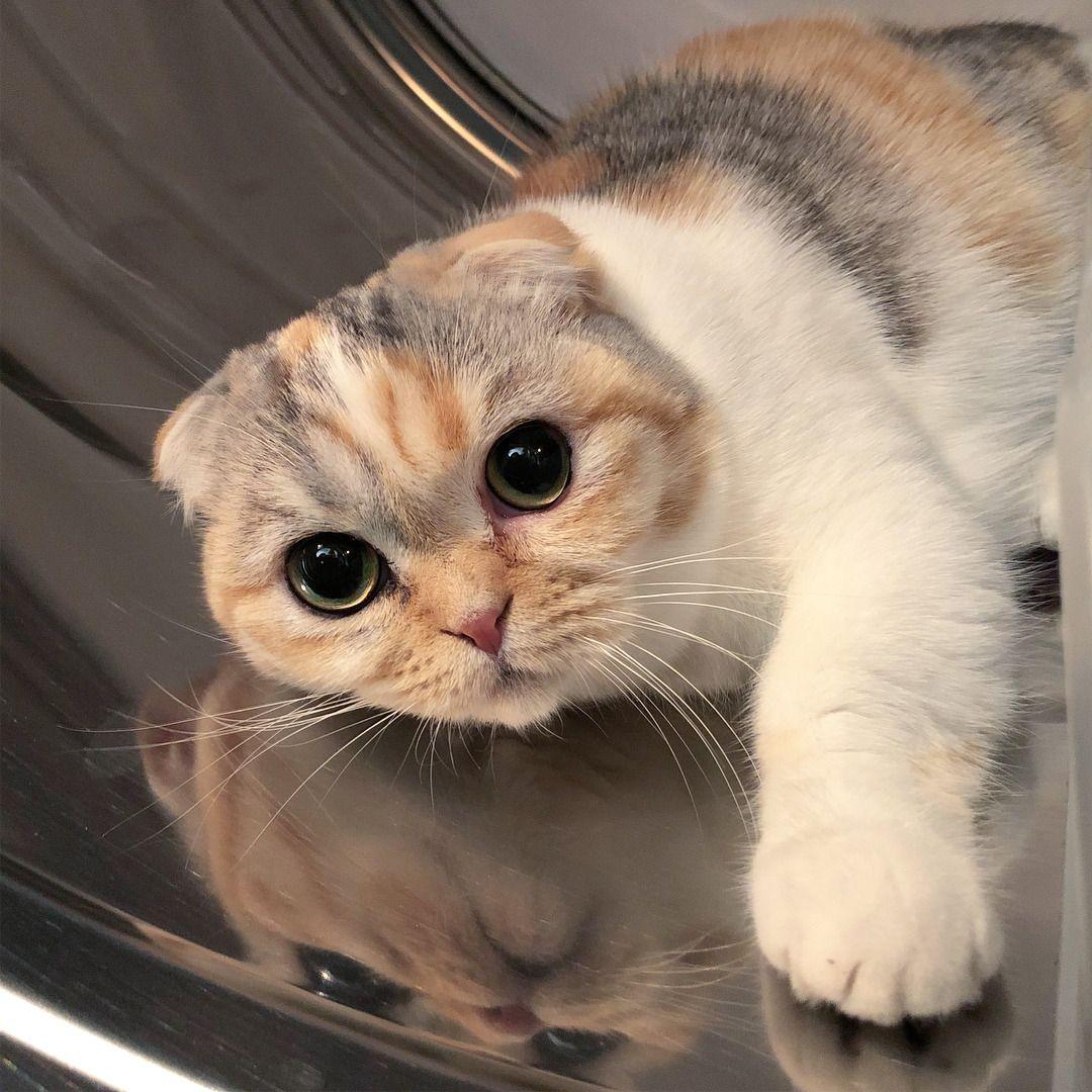 uzn catideas Cute cats, Munchkin cat, Cats