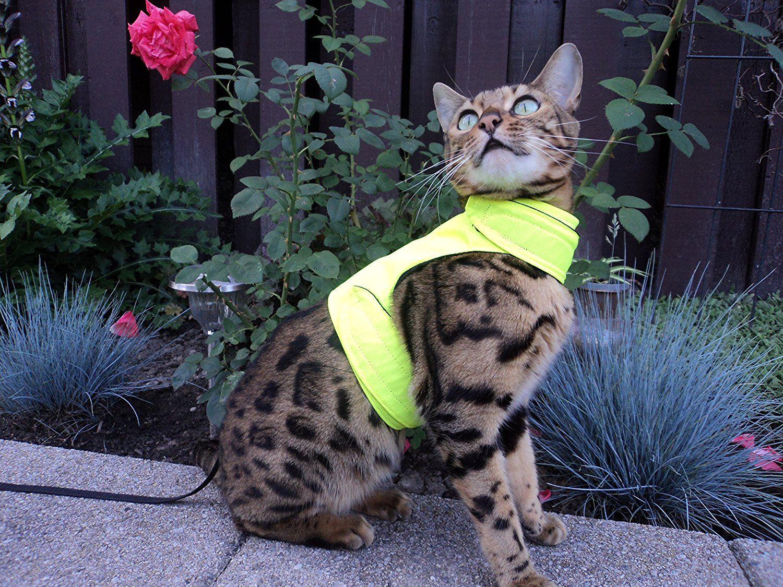 Mynwood Cat Jacket/Harness High Viz Adult Cat Escape