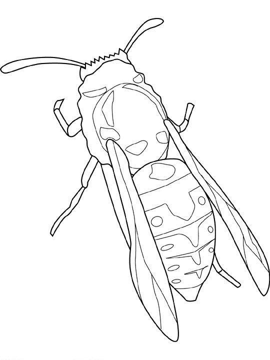 Ausmalbild Insekten Insekten Kukaiņi Insekten Ausmalbilder
