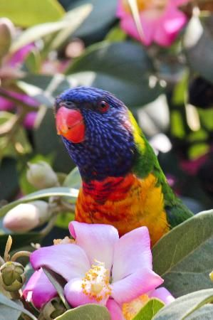 984ba1dd87a698dec2fdef679df60183 - Sydney Opera House To Botanic Gardens Walk