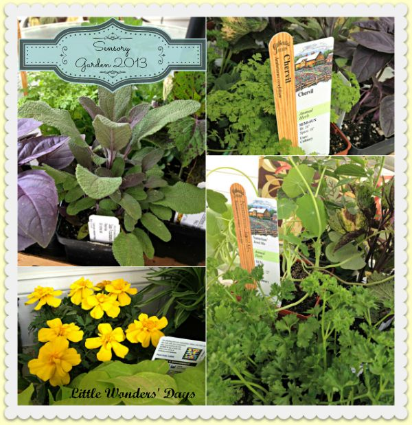 Sensory Garden for Wee Ones ideas for smelling, tasting, and seeing