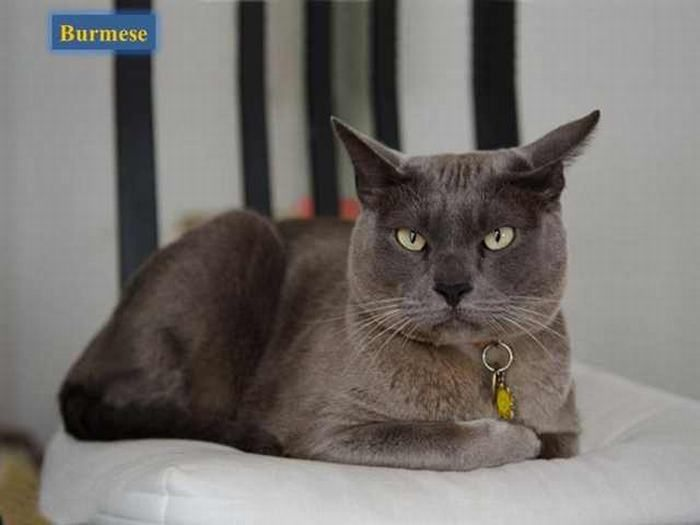 Cat Breeds Cat Breeds Why Do Cats Purr Cats