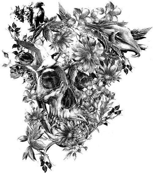 Birdy skull