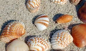 conchas de mar - Google Search