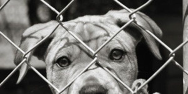 A Petition Just Imagine All The Unnecessary Killings Of Dogs Cats Would Stop Convert High Kill Animal Shelters Into Animal Shelter Animals Dog Adoption