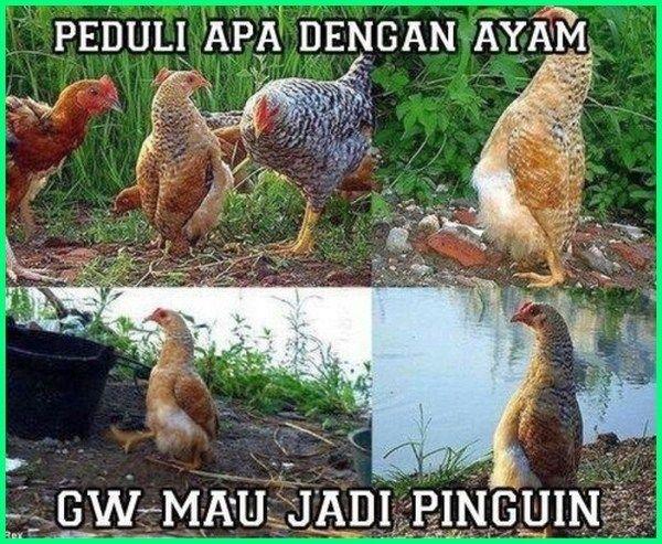 12 Meme Ayam Paling Gokil Dan Kocak Yang Bikin Ngakak Dunia Fauna Hewan Binatang Tumbuhan Gambar Lucu Lucu Binatang