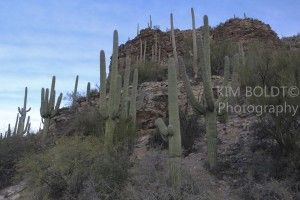 #Tucson Arizona Attractions #Sabino Canyon In Northeast Tucson Tips On Visiting Sabino Canyon  Sabino Canyon is must see in Tucson. There are dozens of trails with varied levels of difficulty. What ever trail you choose to trek, be sure to bring water…