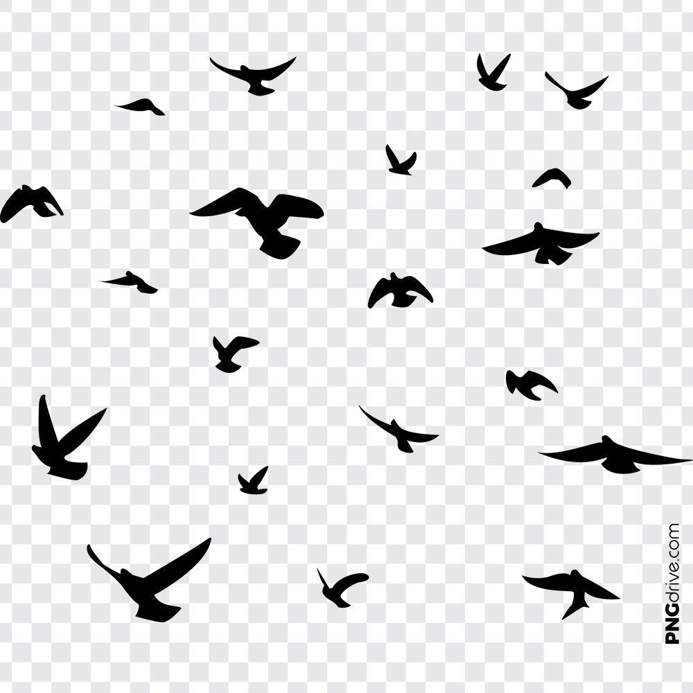 Pin By Png Drive On Birds Png Image Bird Silhouette Art Flying Bird Vector Dove Pictures