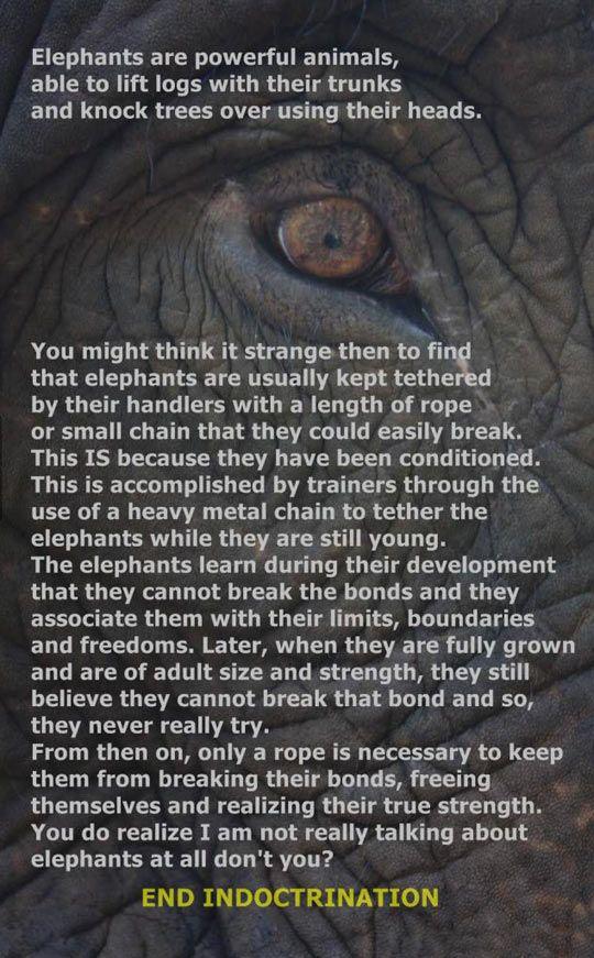 Elephants are powerful animals.