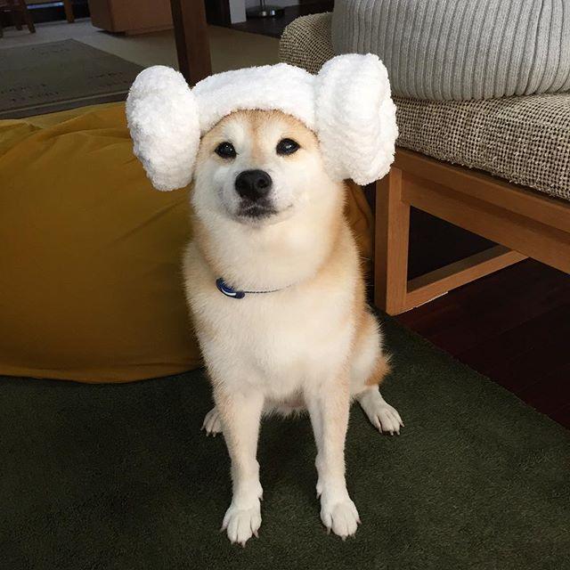 Ai Chan On Instagram Ai Chan Like A Sheep With Towel Romisun Ku6 さんのクロちゃん羊を見ました 本家は Makonatuさん アイちゃんも なんか違うよ 笑 何度も 可愛い 動物 わんちゃん ペット