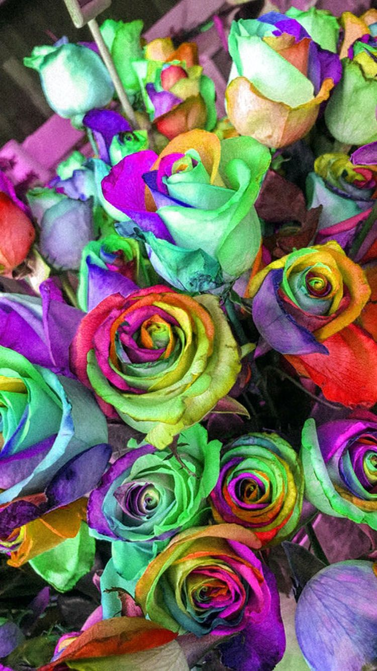 Rainbow Roses Wallpaper Phone With Images Rose Wallpaper