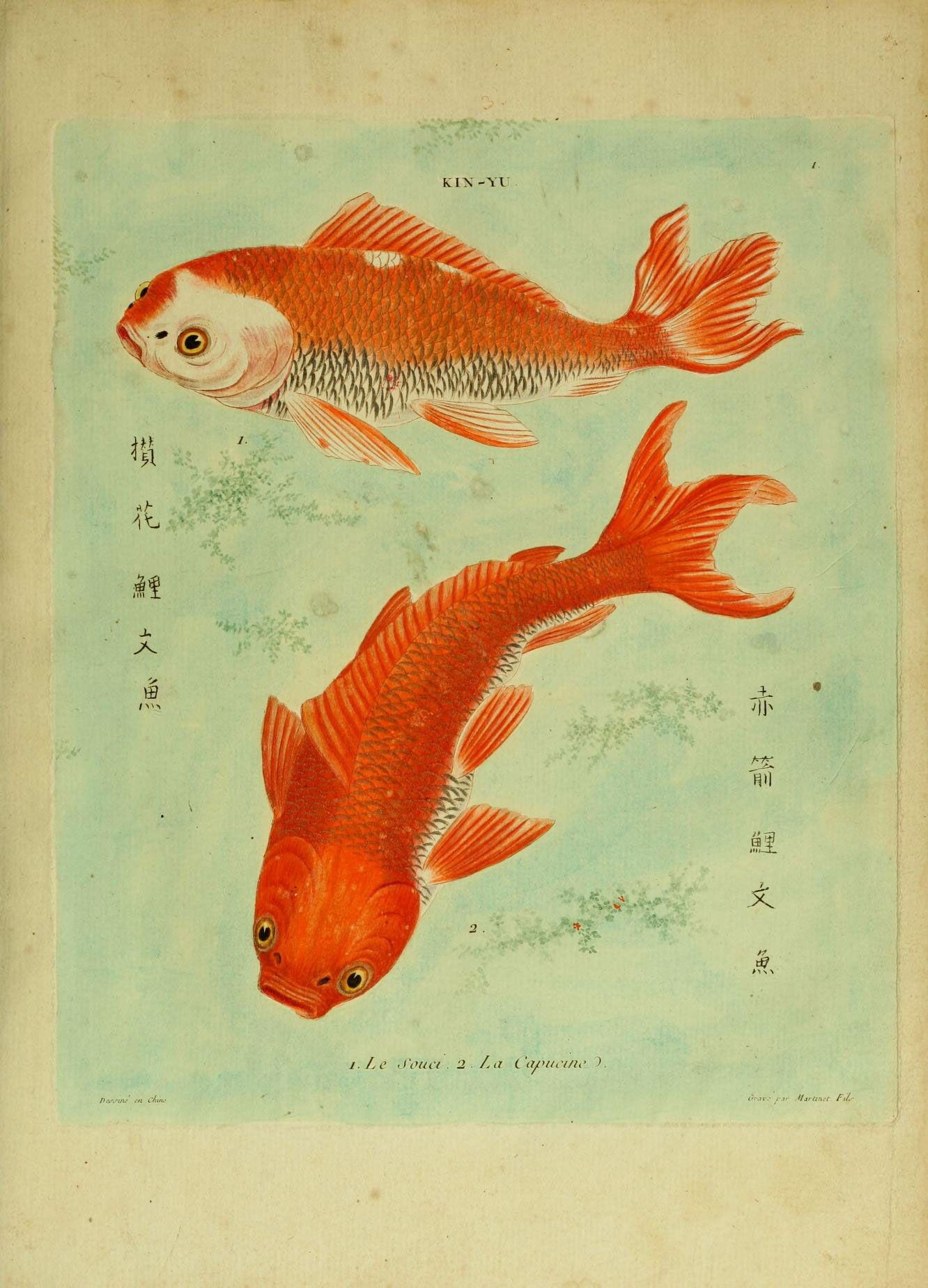Pin by Nanette Raoelina on Fish | Pinterest | Fish and Illustrations