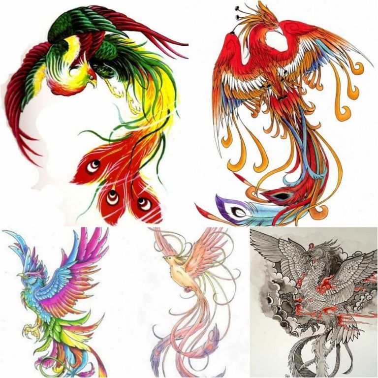 Pin On Phoenix Tattoo Design