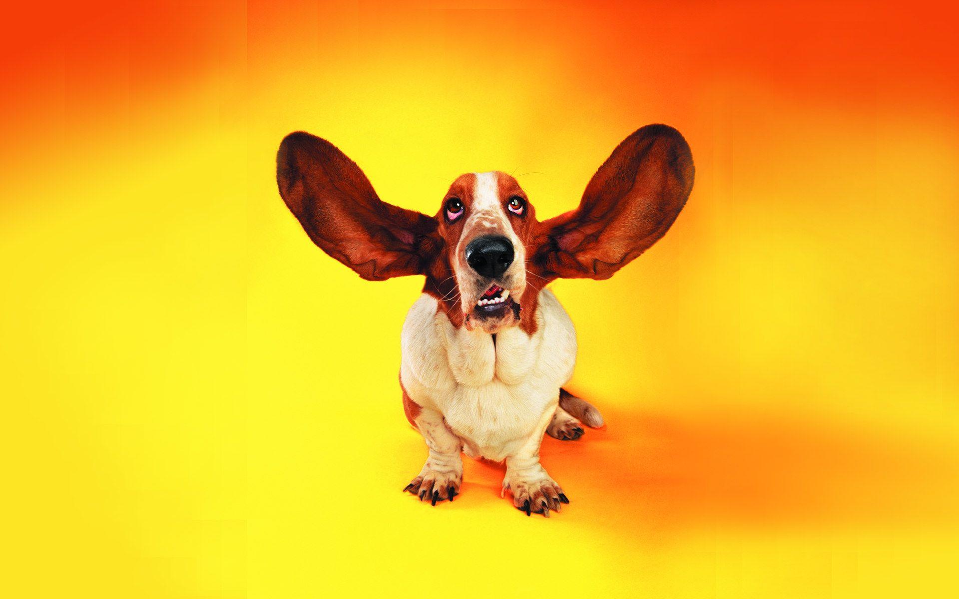 Free download funny dog wallpaper animais pinterest dog animal free download funny dog wallpaper sciox Gallery