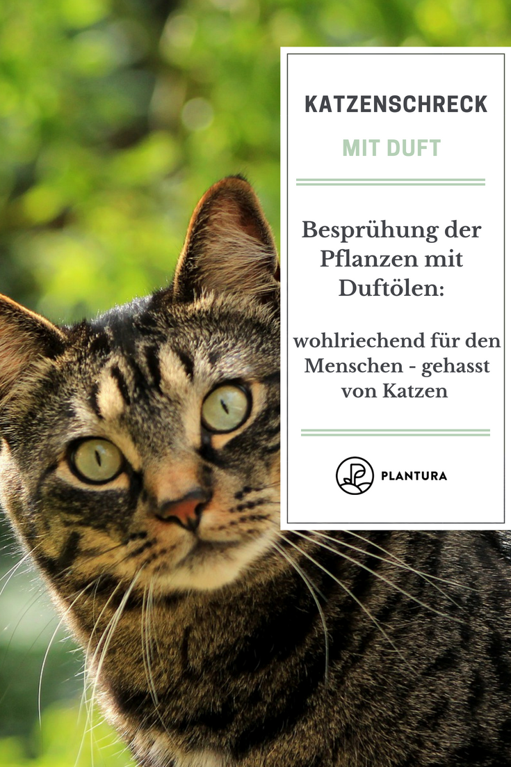 Katzenschreck Im Test Tipps Gegen Katzen Im Garten Katzen Katzengarten Garten