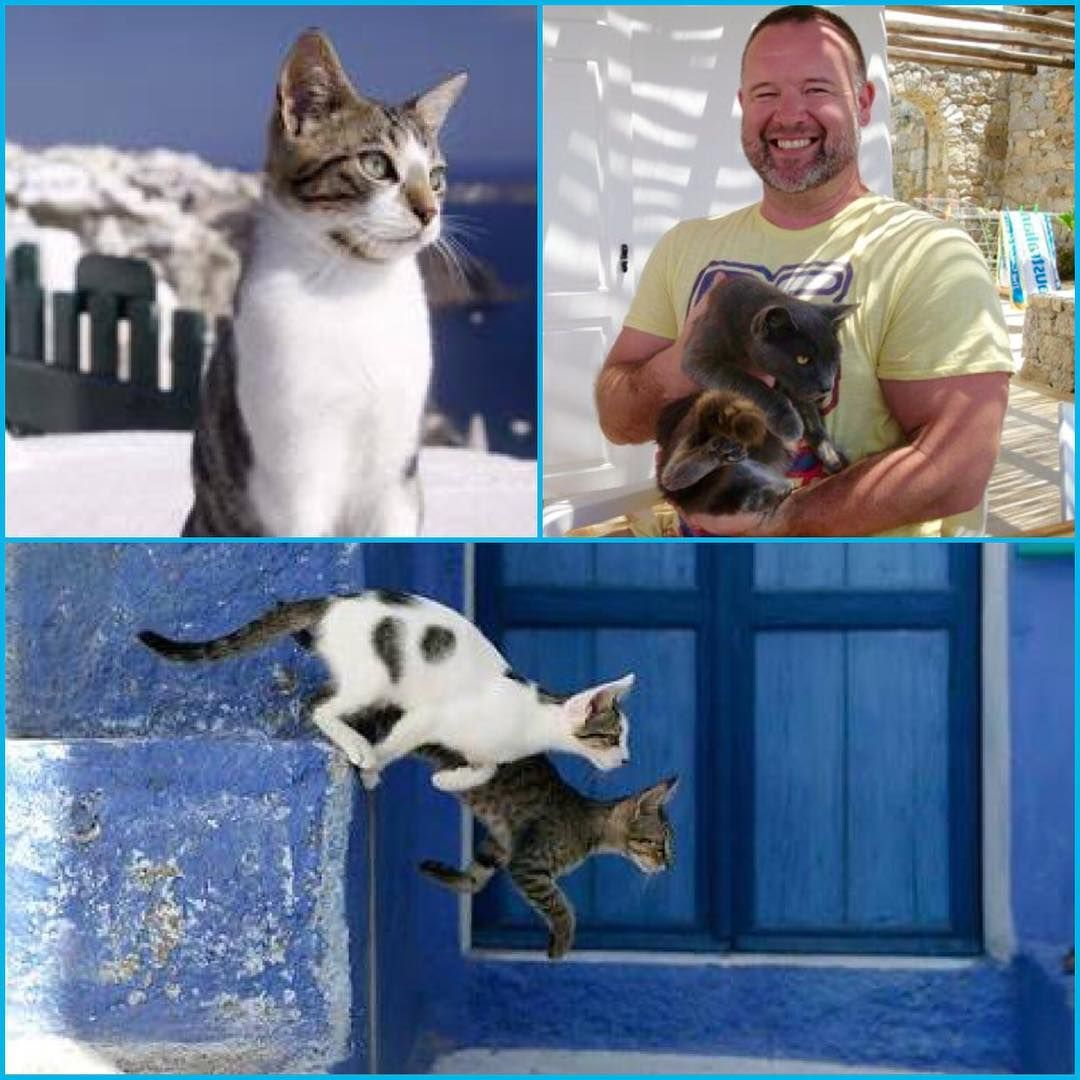 Check Out The Aegean Cat Who Adopted Me In Mykonos A Few Years Ago