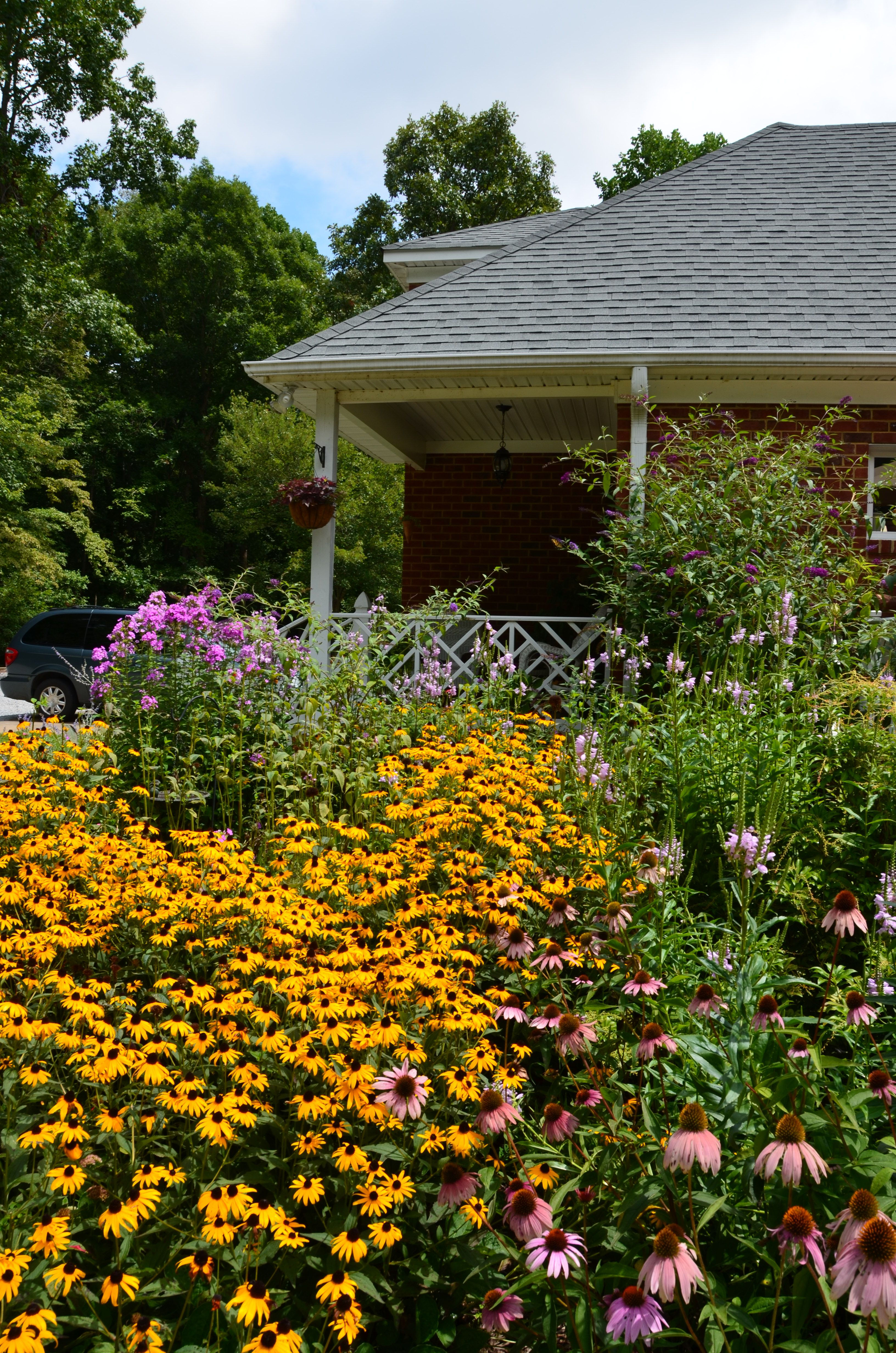 Looking at kitchen garden with back to pool and Black-eyed Susan in full bloom, end of July.