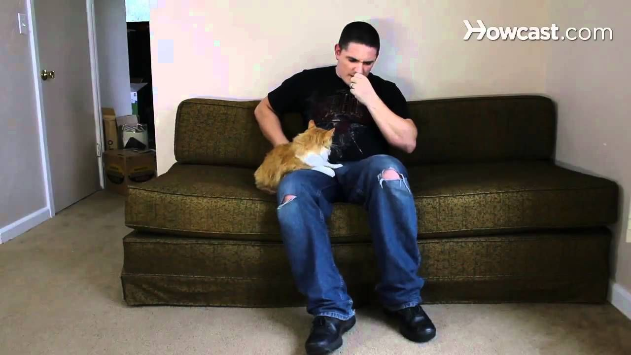 Cat training scratching how to train your cat not to bite