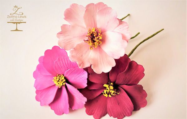 COSMOS FLOWER   Saracino (With images)   Flowers, Sugar ...
