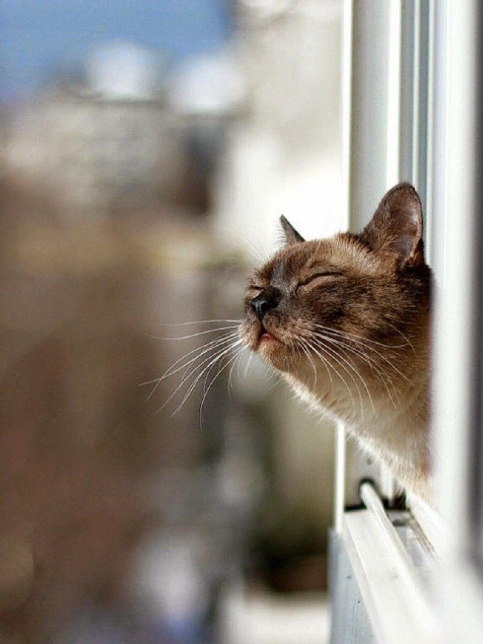 Sweet Kitty Getting A Whiff Of Fresh Air Cute Cats Cats Smelling Cats