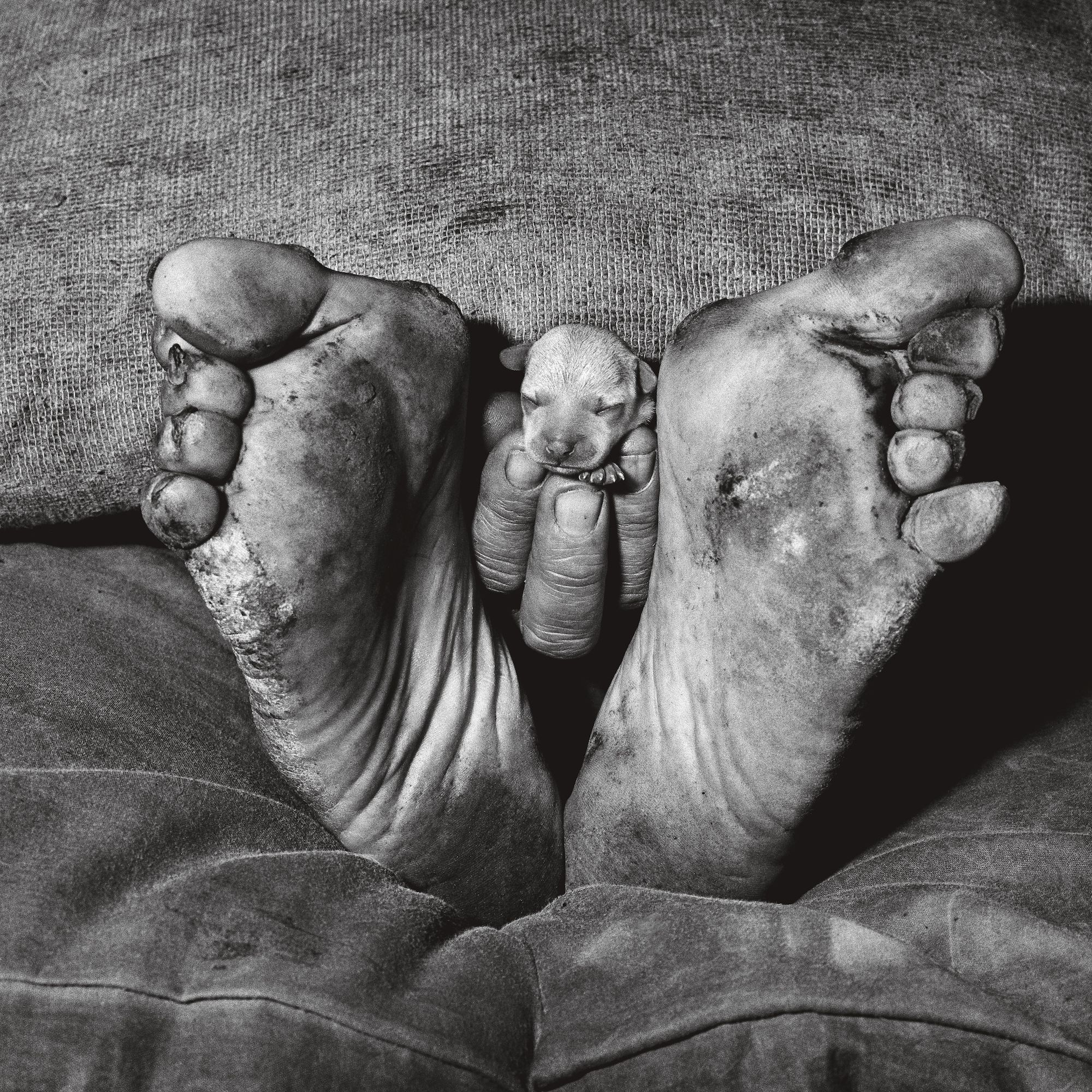 Jessie Pelada unearthed photos from roger ballen's nightmarish archive