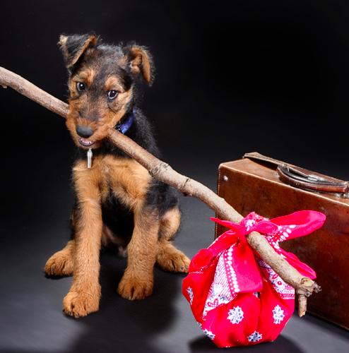 Karing Kennels Pet Relocation Pet Travel Dog Travel