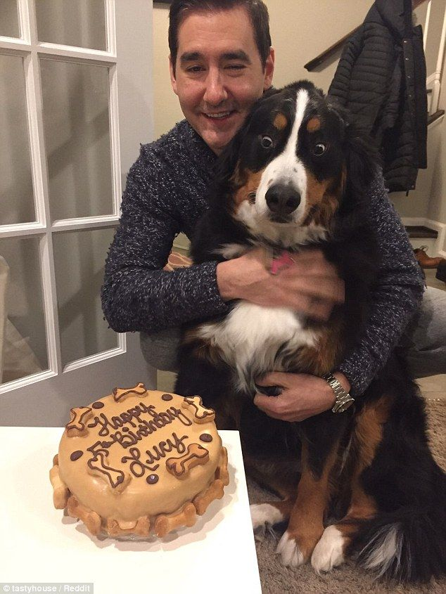 Lucy The Dog Has Hysterical Reaction To Personalized Birthday Cake Funny Animal Pictures Funny Animals Cute Animals