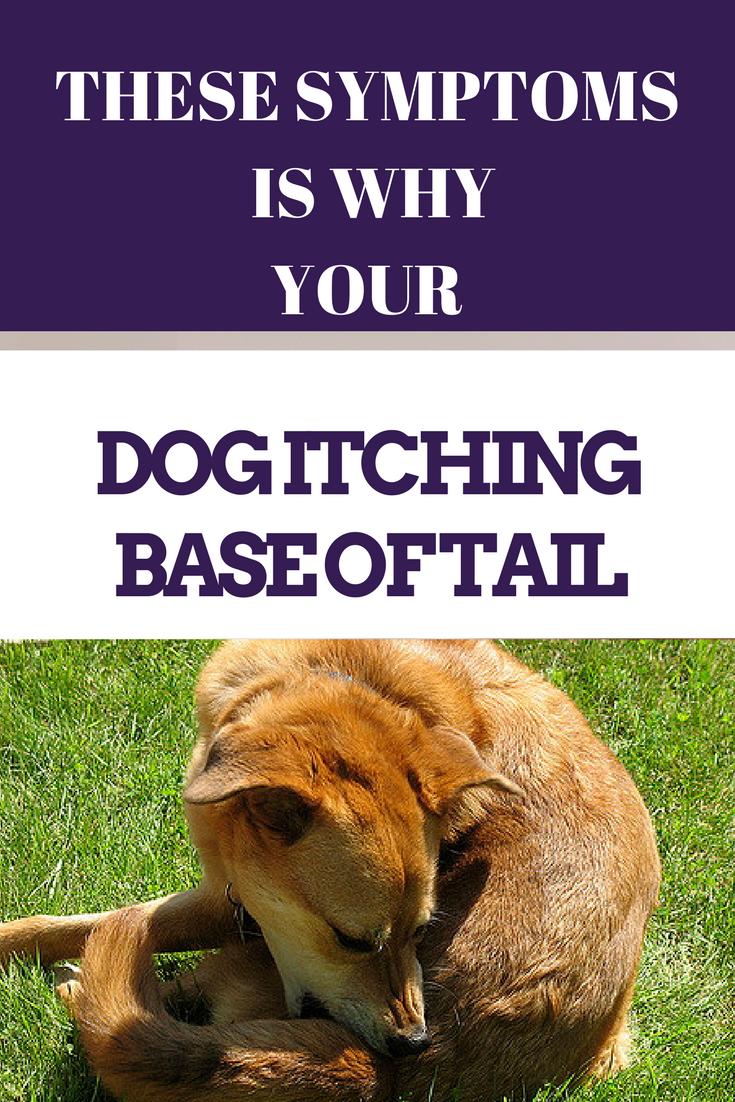 Dog Itching Base Of Tail Best Pet Care Hub Dog Allergies Dog Skin Allergies Dog Itching