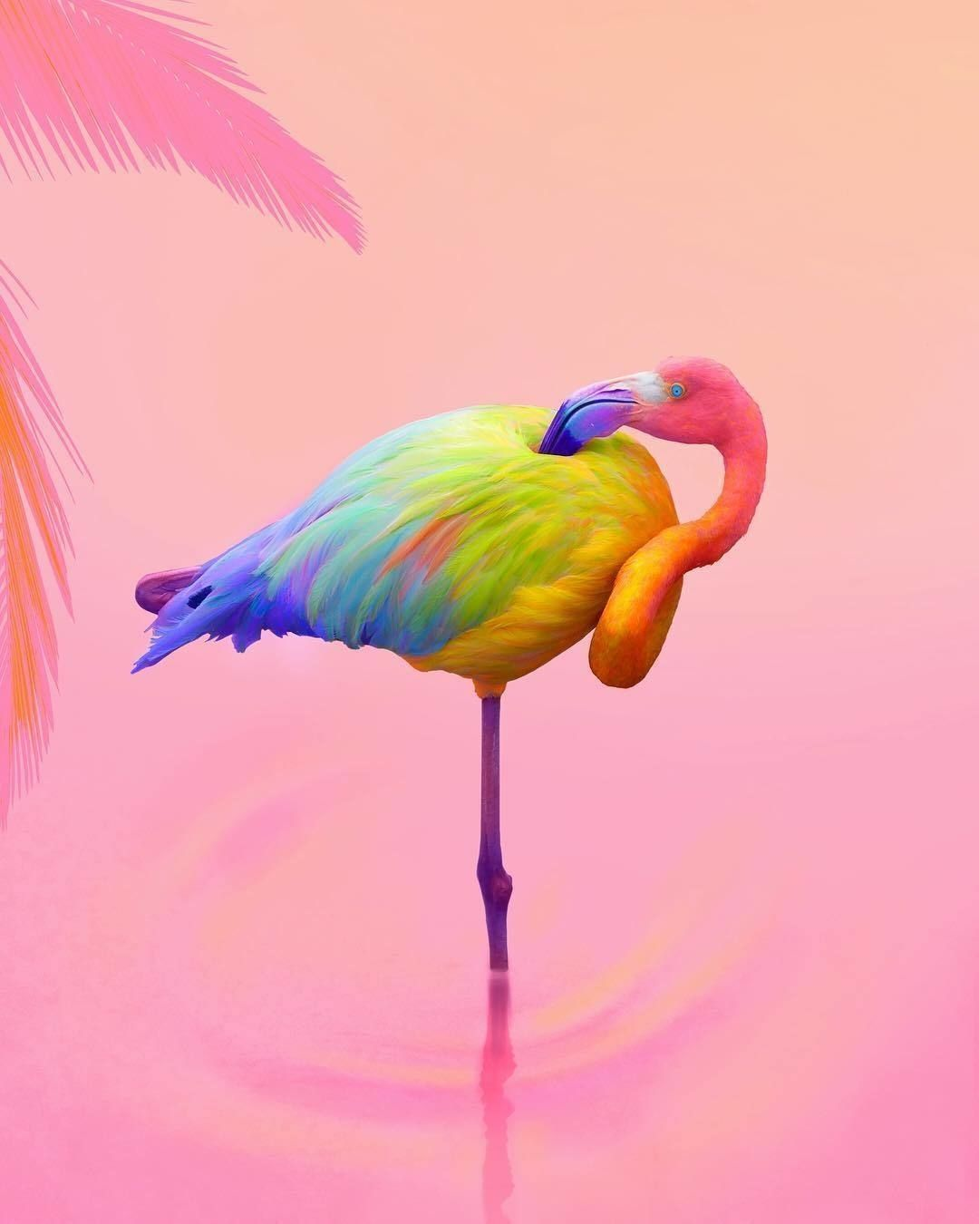 Rainbow Flamingo
