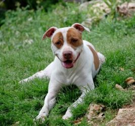 Pin On Adoptable Animals In Tx