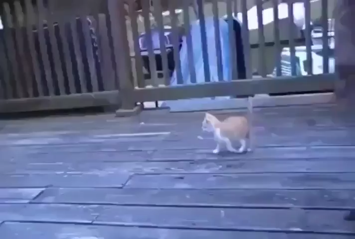 Kitten playing with a peacock