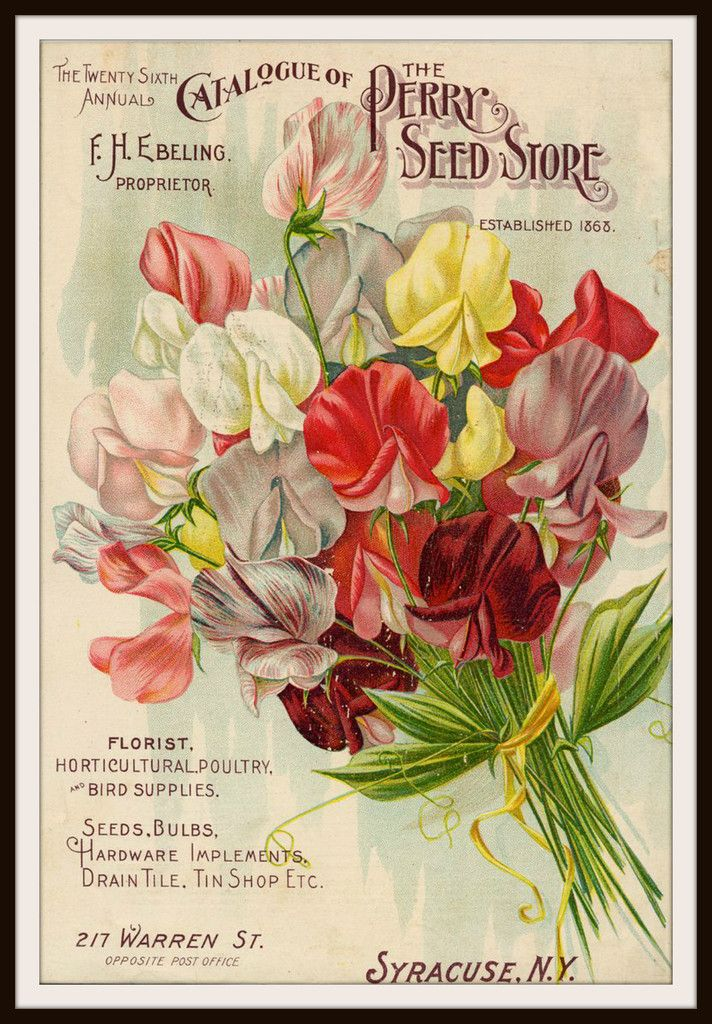 Beautiful Art Print Vintage Seed Pack Image Wall Decor Unframed Is 8 5 X 11