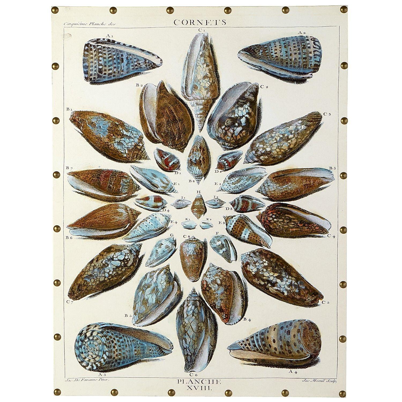 Seashell Gathering Art