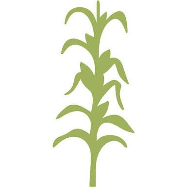 corn stalk stencil drawing google search refinished furniture rh pinterest com Cartoon Corn Corn Stalk Drawing