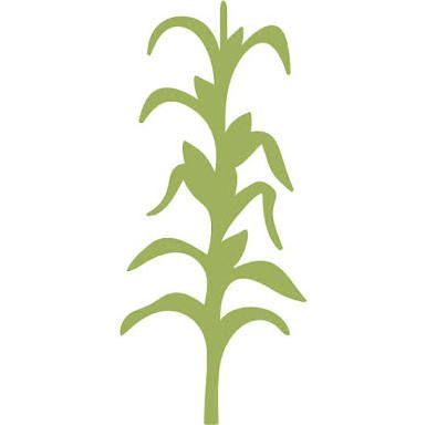 corn stalk stencil drawing google search refinished furniture rh pinterest com Fall Corn Fall Corn