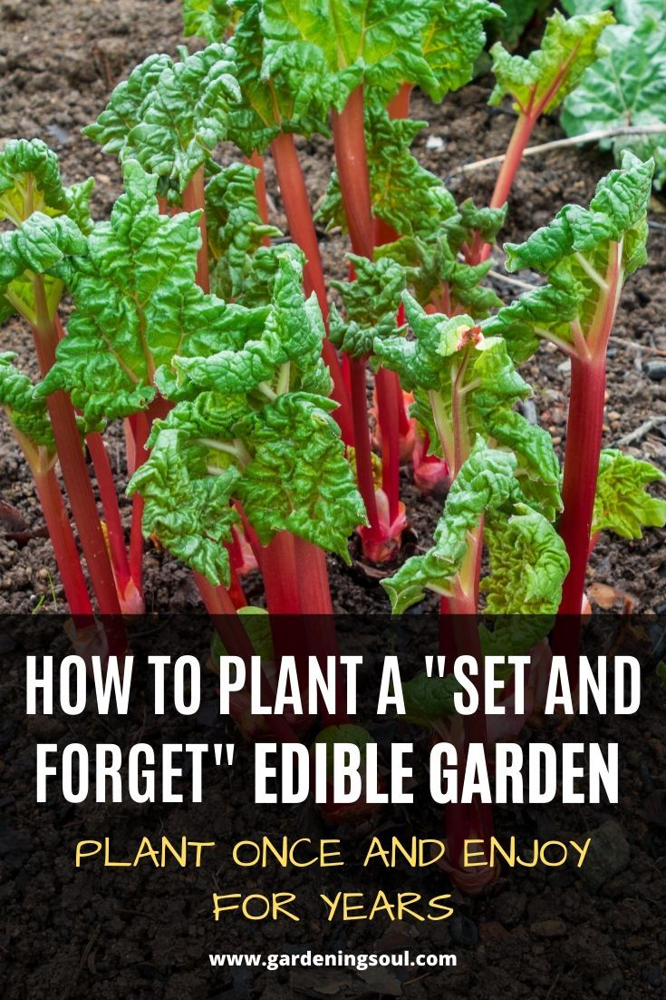 How To Plant A Set And Forget Edible Garden Plant Once And