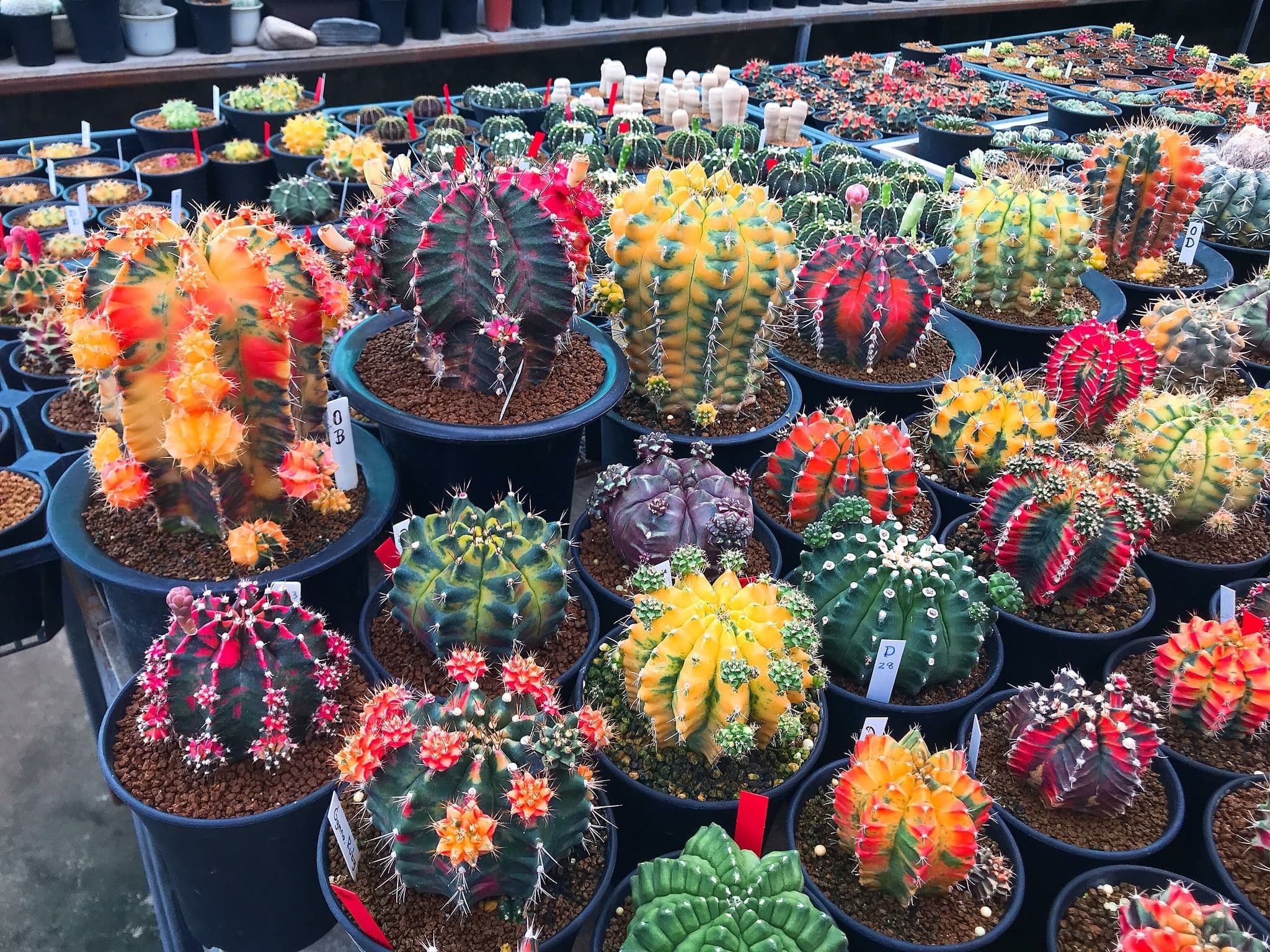 Pin by Cactus_sweethouse on Cactus succulent Cactus
