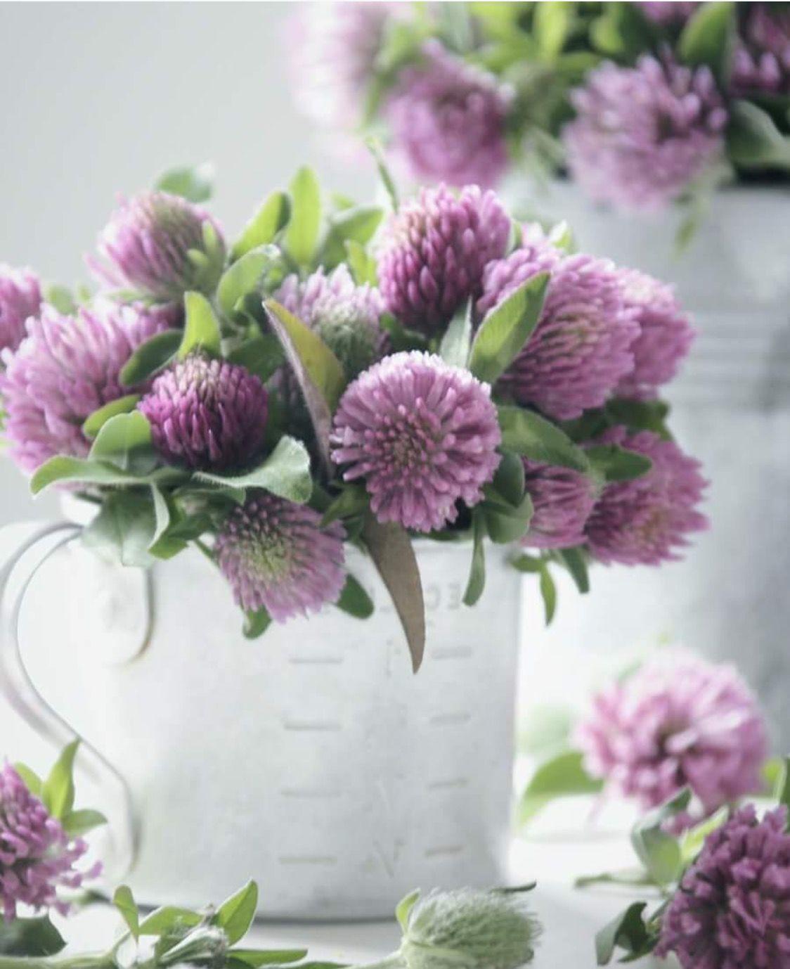 Flores para amar ..